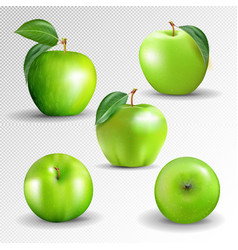green apples collection isolated on a transparent vector image