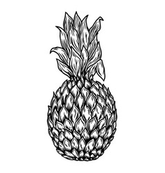 hand drawn pineapple in engraving style design vector image