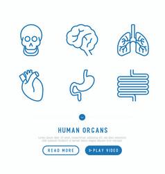 human internal organs thin line icons set vector image
