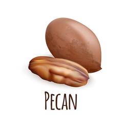 Pecan nut icon realistic style vector
