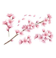 sakura realistic set vector image