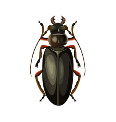 Titan beetle vector