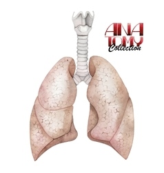 Watercolor anatomy collection - lungs vector image