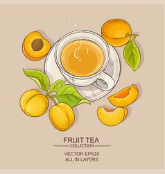 Apricot tea vector