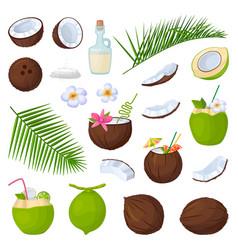 Coconut isolated cartoon set icon vector