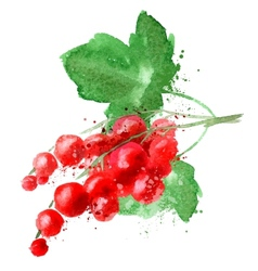 Red currant logo design template fruit or vector