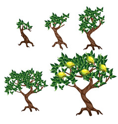 Stages of growing a lemon tree isolated vector