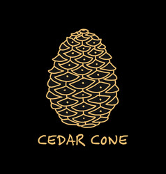 Cedar cone sketch for your design vector