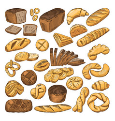 Colored hand drawn pictures of fresh bread and vector