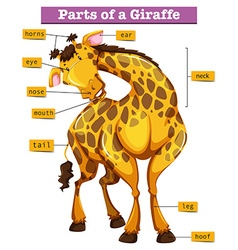 Diagram showing parts of giraffe vector