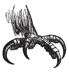 eagle talon vintage vector image