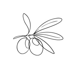 one line drawing olives vector image