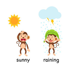 Opposite words sunny and raining vector