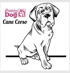 Cane corso puppy sitting drawing hand sketch vector