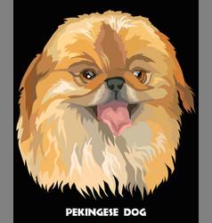 Colorful portrait of pekingese dog vector