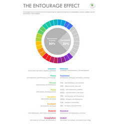he entourage effect proportion vertical business vector image