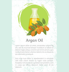 Information about argan oil in bottle argania vector