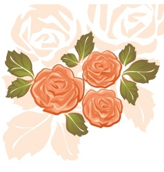 orange roses vector image