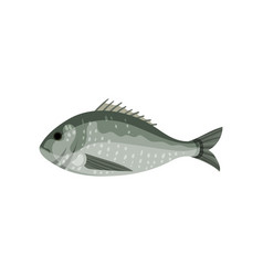 Detailed flat icon of sea bream side view vector