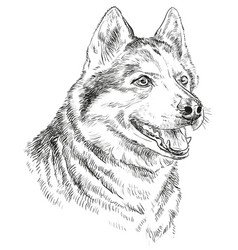hand drawing portrait of siberian husky vector image