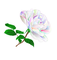 simple colored rose stem with leaves natural vector image