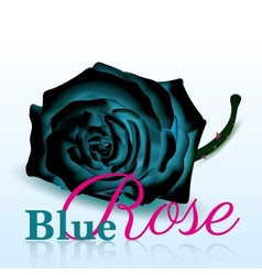 Blue Rose On white Background with Text vector image