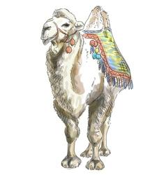 camel watercolor style vector image vector image