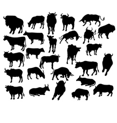 bull cow vector image