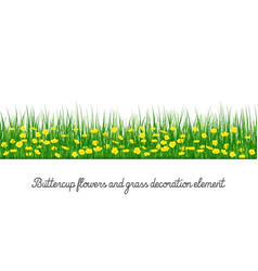 buttercup and grass decoration element vector image