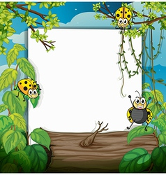 Ladybugs and a white board vector image vector image