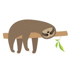 Sloth lying on tree branch fluffy fur cute vector