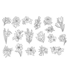 set of beautiful monochrome flowers lily tulip vector image vector image