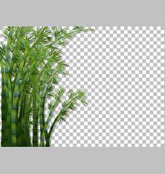 Bamboo tree on transparent background vector