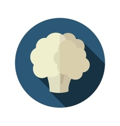 Cauliflower flat icon with long shadow vector