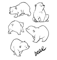 hand drawing cute bear with a lot variation vector image