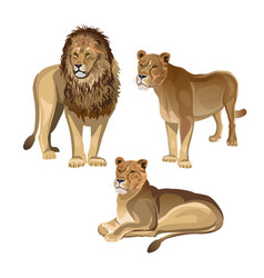Lion with two lionesses vector