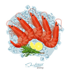 shrimp with rosemary and lemon on ice cubes vector image