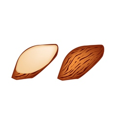 Whole and Slice Almonds on White Background vector image