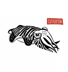 Cuttlefish black and white vector