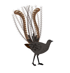 bird with long feathers vector image