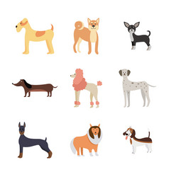 cartoon dog breed set isolated on white background vector image