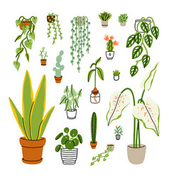 collection 18 different home plants vector image