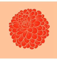 Flower Dahlia drawn in graphical style vector