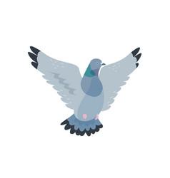 Flying pigeon flat grey dove vector