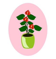Houseplant - anthurium vector