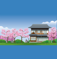 japan traditional house at cherry blossom season vector image