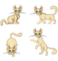 Kitten in different poses vector