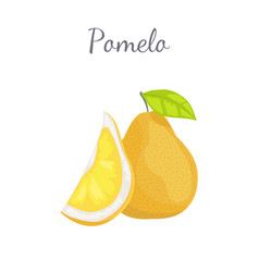 Pomelo exotic fruit tropical food icon vector