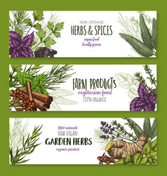 spices and herbs banners for shop vector image