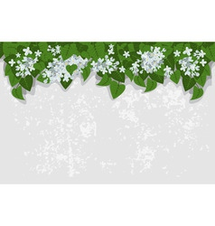 grunge background with white lilacs detailed vecto vector image vector image